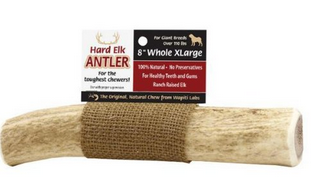 Image of Elk Antler 8in XL-Whole